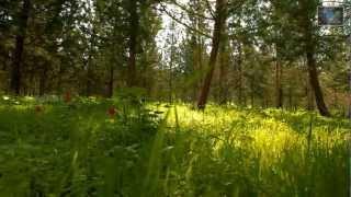 Malayalam Christian Song ~ Ennesuve Nee Ente Swanthame / Kochubaby, Houston /